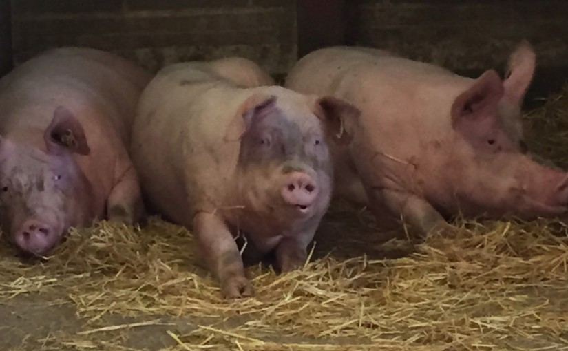 Otley Pig Discussion Group
